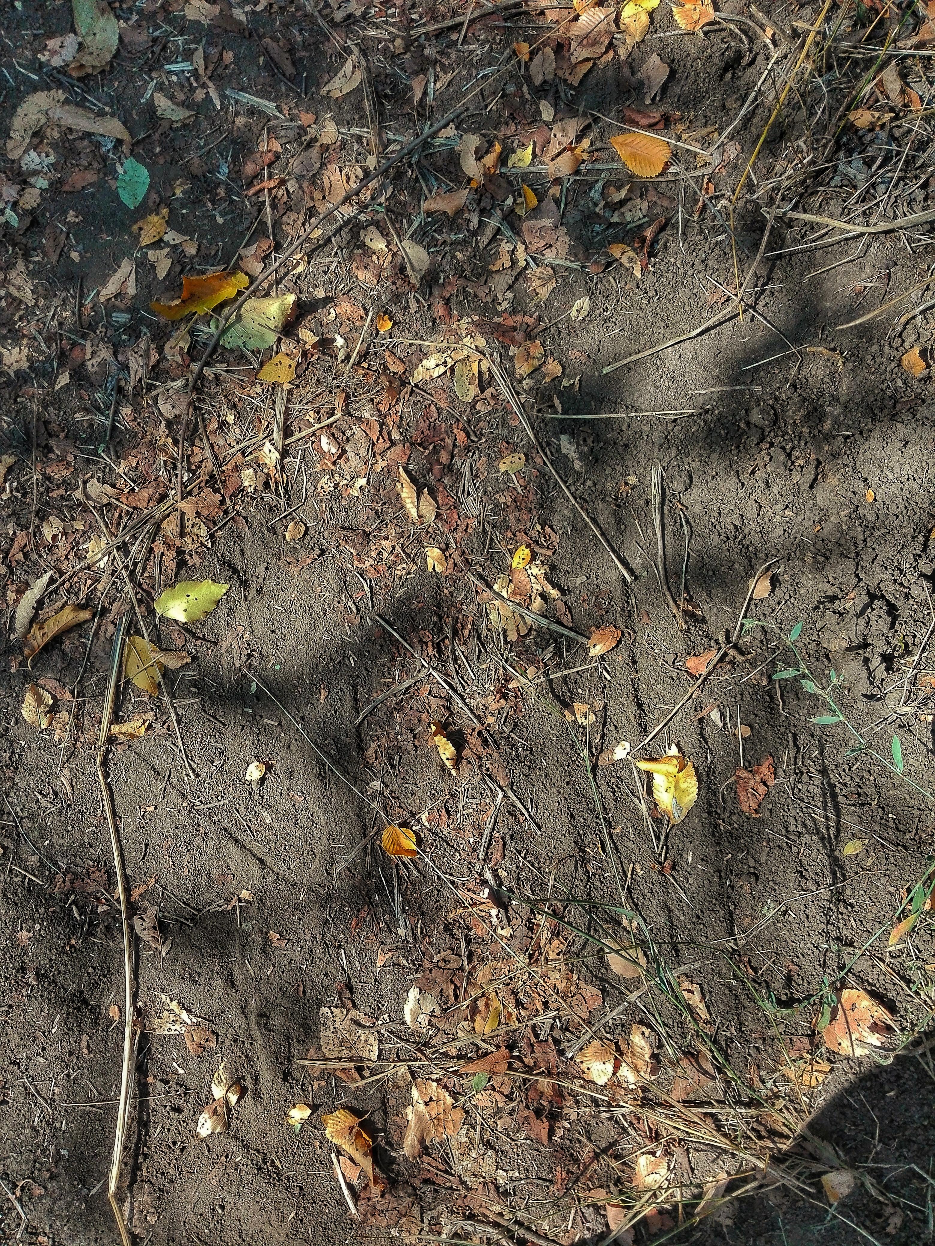 грунт у лісі