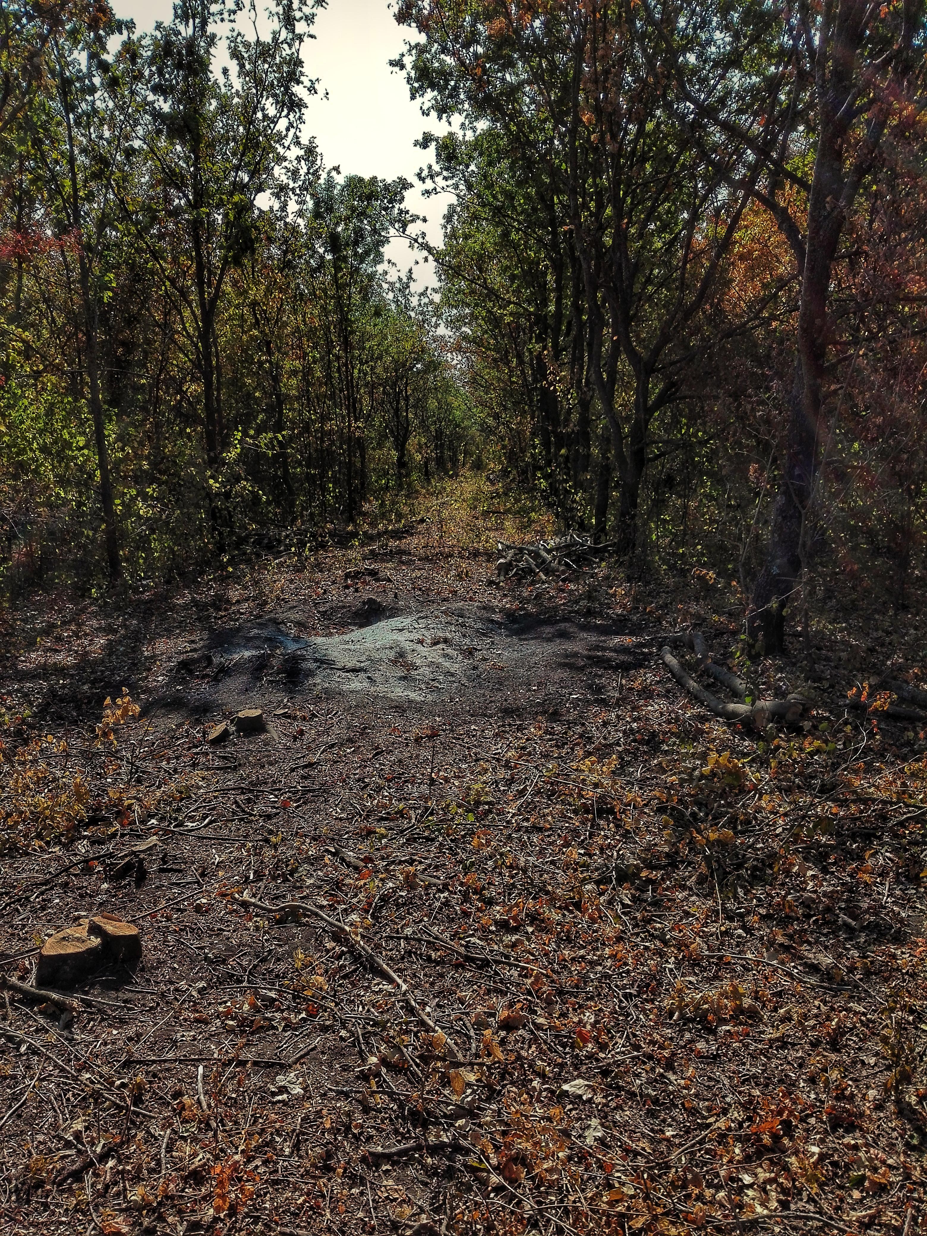 санітарна вирубка у лісі