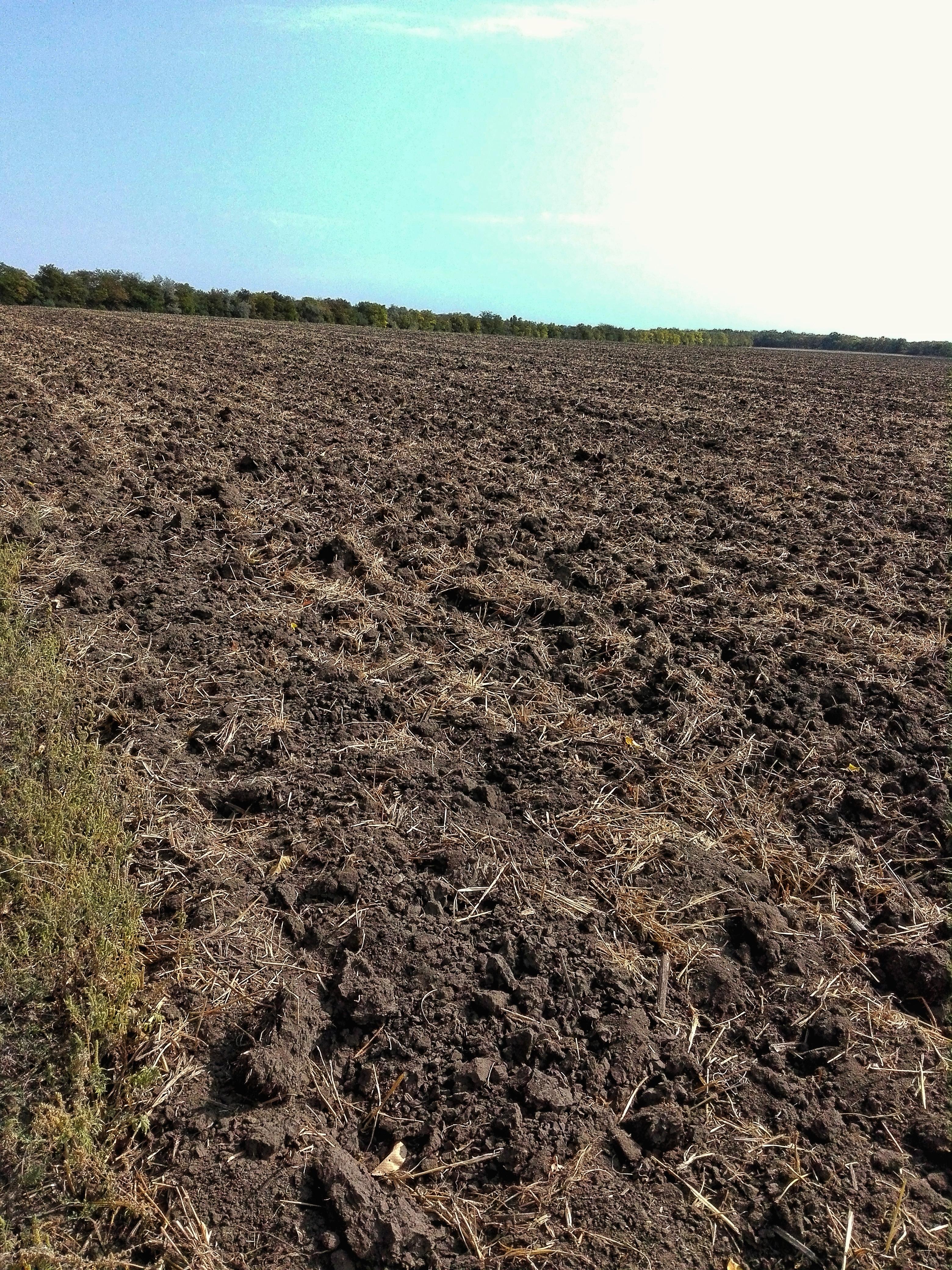 зорана земля у полі